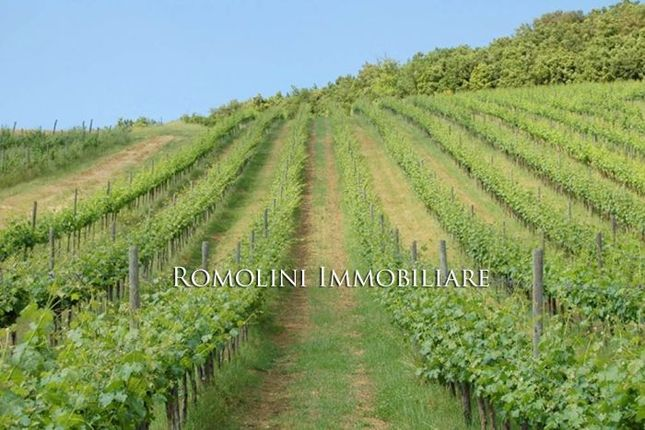 Farm Estate With Wine And Horses For Sale In Siena Tuscany