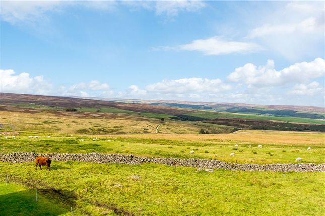 Distant Views of Whiterow Cottages, Greenhow Hill, Harrogate, North Yorkshire HG3