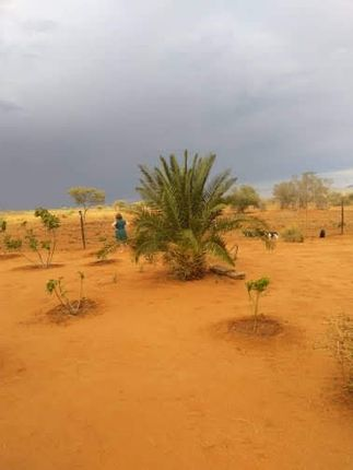 Thumbnail Land for sale in Farm Wieringen, Otjiwarongo, Namibia