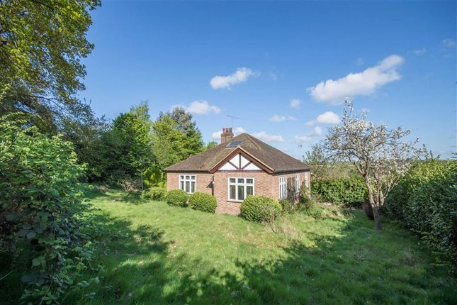 Thumbnail Property for sale in Chadwell Rise, Ware, Hertfordshire