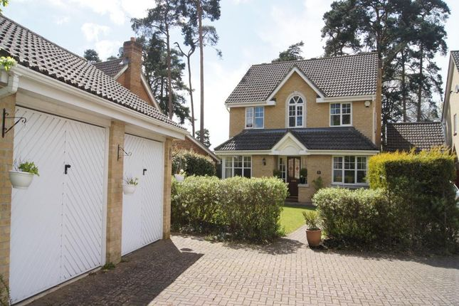 Thumbnail Detached house to rent in Paget Close, Camberley, Surrey