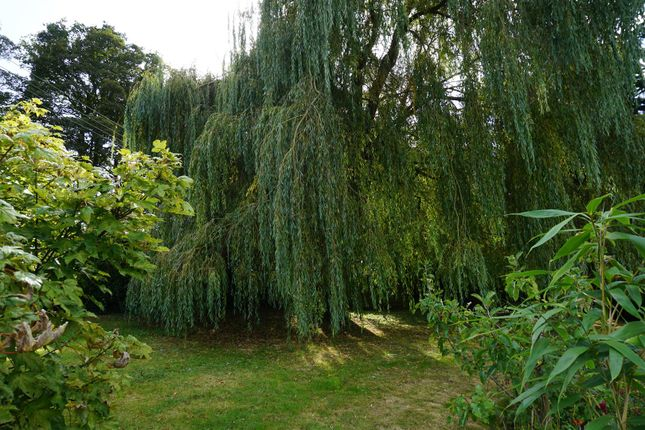Rear Gardens of Brightwell, Ipswich IP10
