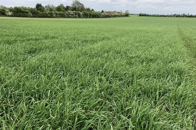 Thumbnail Commercial property for sale in Sale Of Land At Dorrington, Lincolnshire