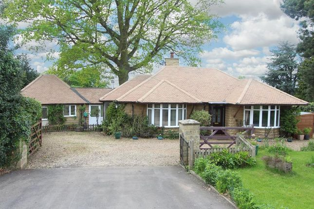Thumbnail Bungalow for sale in Watford Road, Crick, Northampton