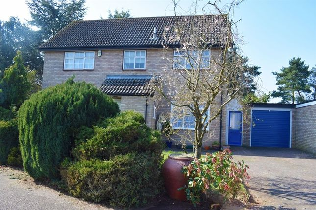 Thumbnail Detached house for sale in Nunnery Drive, Thetford, Norfolk