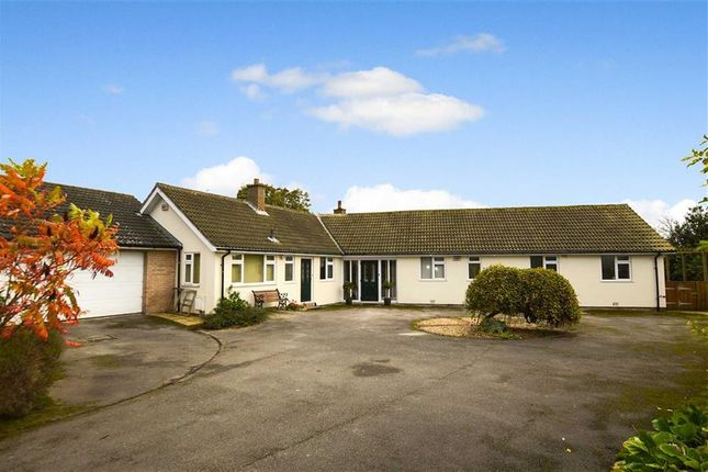 Thumbnail Detached bungalow for sale in Main Street, Brandesburton, East Yorkshire