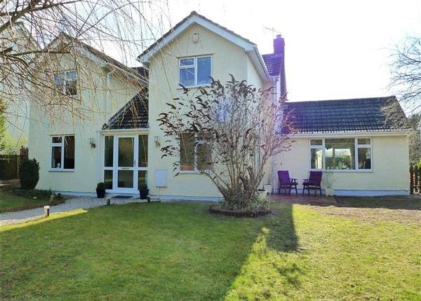 Thumbnail Detached house to rent in Paddocks Drive, Newmarket, Newmarket