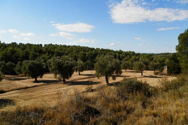 Overview Of Site of Parcello 31 Poligono 8, Arens De Lledo, Mattarrana, Spain, Mattaranna SA38 9As, Spain