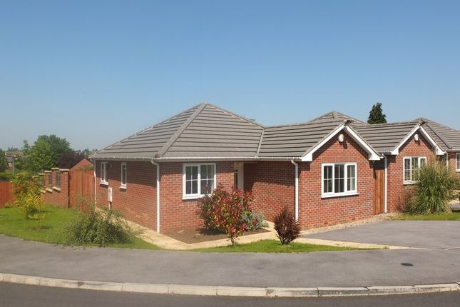 Thumbnail Detached bungalow to rent in The Croft, Shirebrook