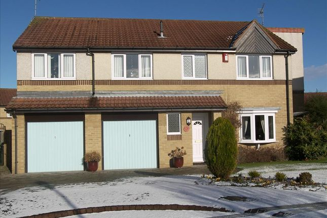Thumbnail Detached house for sale in Pinewood Avenue, Cramlington