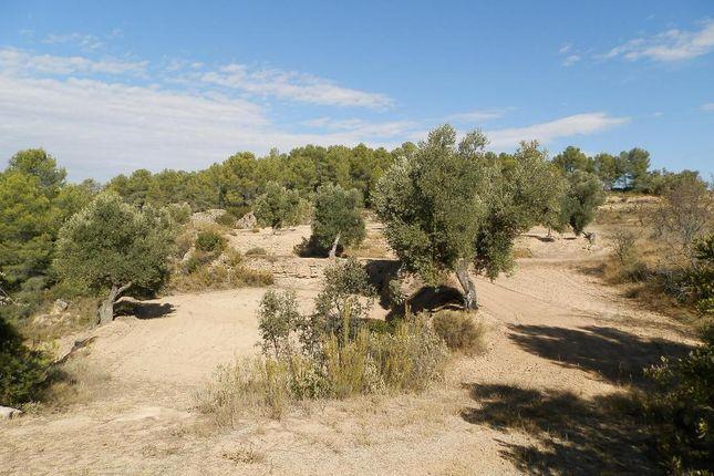 Entrance To Site of Parcello 31 Poligono 8, Arens De Lledo, Mattarrana, Spain, Mattaranna SA38 9As, Spain