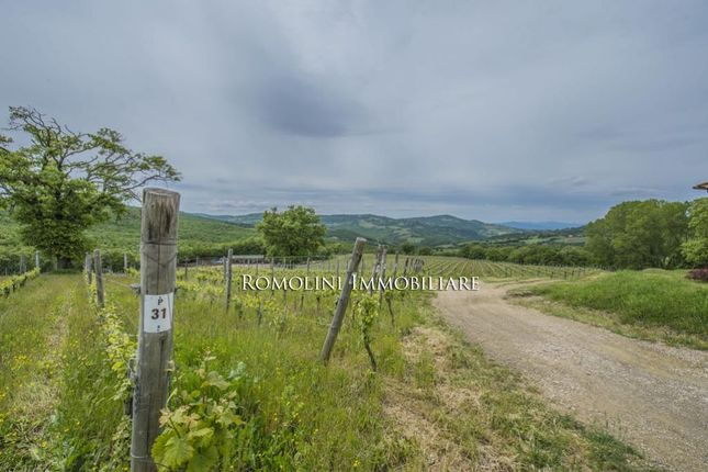 Farm for sale in Scansano, Tuscany, Italy