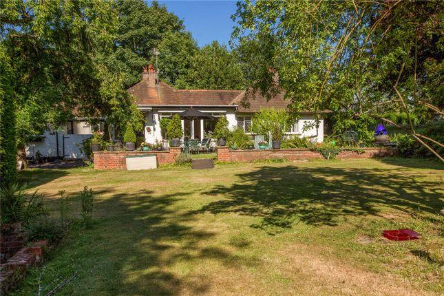 Thumbnail Detached bungalow for sale in The Avenue, Chobham, Woking, Surrey