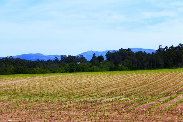 Thumbnail Land for sale in Agricultural Land, Caminha, Viana Do Castelo, Norte, Portugal