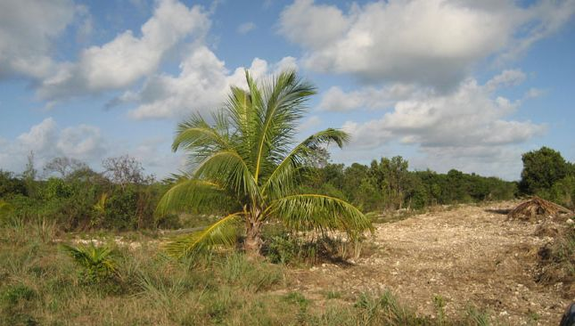 Land for sale in Wemyss Bight, Eleuthera, The Bahamas