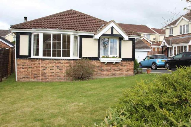 Thumbnail Bungalow to rent in Harebell Close, Killinghall, Harrogate