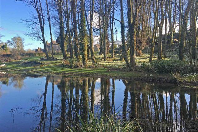 Snowdrop Pool of Ty Fry, Rhoscefnhir, Rhoscefnhir LL75