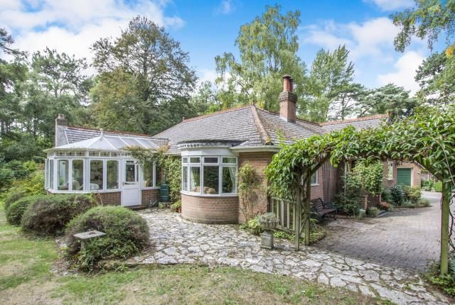 Thumbnail Bungalow for sale in St Leonards, Ringwood, Hampshire