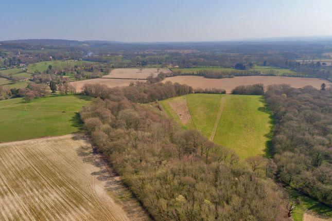Woodland And Pasture