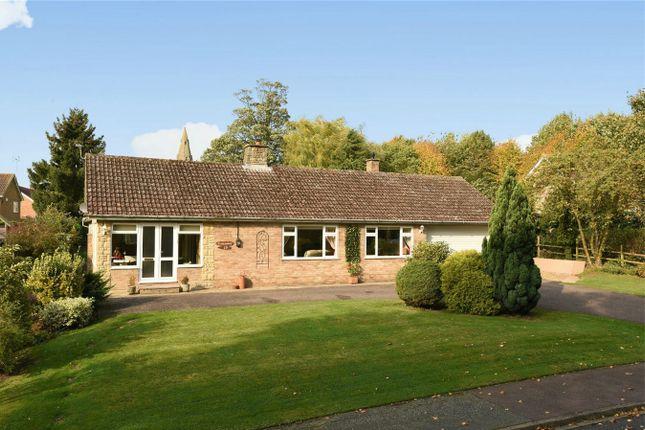 Thumbnail Detached bungalow for sale in The Bury, Pavenham, Bedford