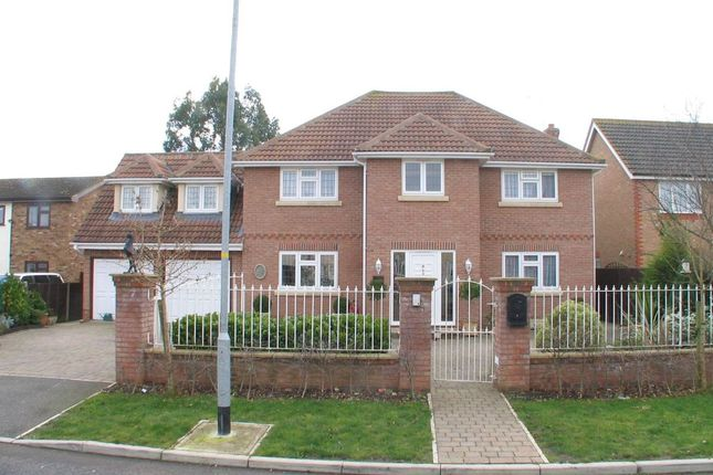 Thumbnail Detached house for sale in Smiths Avenue, Mayland, Chelmsford