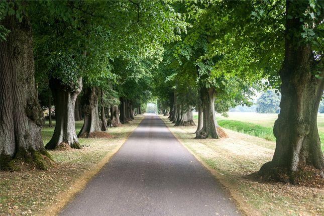 Driveway of Charlton Park, Charlton, Malmesbury, Wiltshire SN16