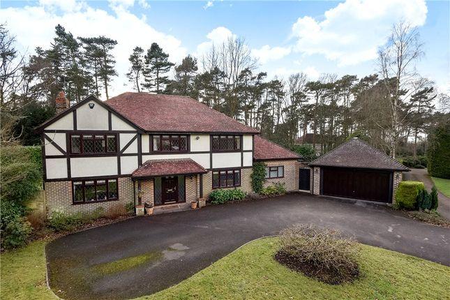 Thumbnail Detached house for sale in Sparrowhawk Close, Ewshot, Farnham