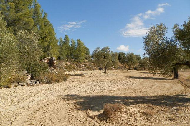 Another View 2 of Parcello 31 Poligono 8, Arens De Lledo, Mattarrana, Spain, Mattaranna SA38 9As, Spain