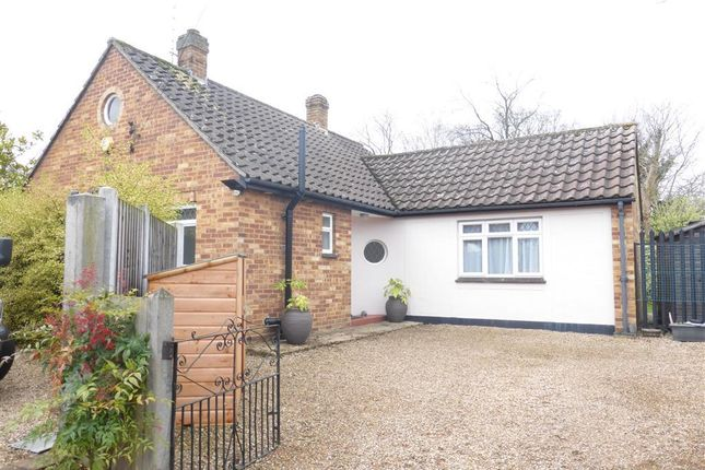 Thumbnail Bungalow to rent in St. Johns Green, Writtle, Chelmsford