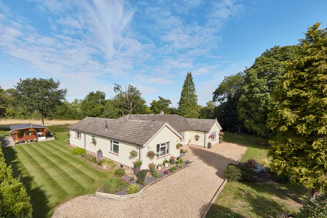 Thumbnail Detached bungalow for sale in Brockley, Bury St Edmunds, Suffolk