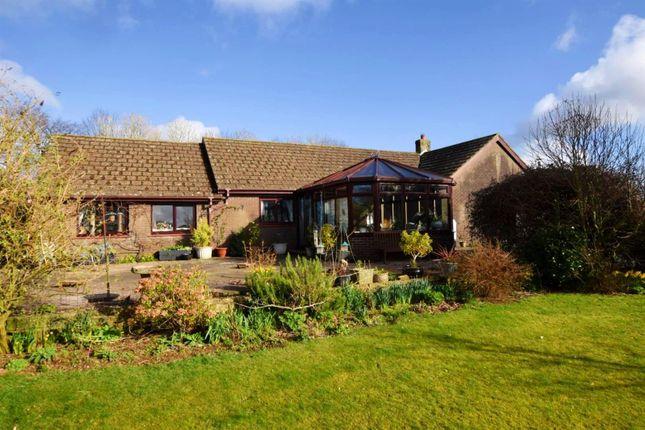 Thumbnail Detached bungalow for sale in Newchapel, Boncath