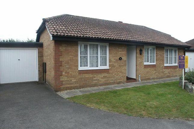 Thumbnail Detached bungalow to rent in Doe Copse Way, New Milton