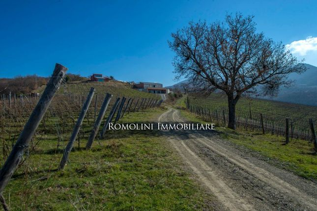 Commercial property for sale in Cinigiano, Tuscany, Italy
