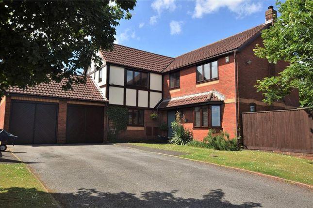 Thumbnail Detached house for sale in Whitebeam Close, Paignton, Devon