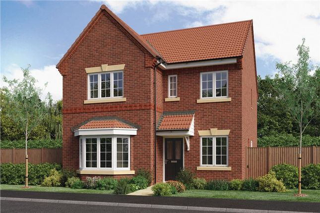 """Thumbnail Detached house for sale in """"Calver"""" at Milldale Road, Farnsfield, Newark"""