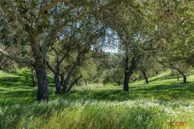 Thumbnail Land for sale in Santa Ynez, California, United States Of America