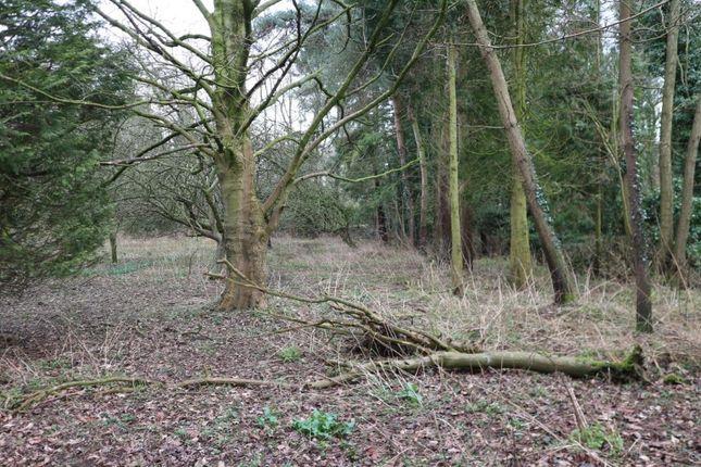 Thumbnail Land for sale in Land Adjacent To Dunbheagan, Dereham Road, Westfield, Dereham, Norfolk