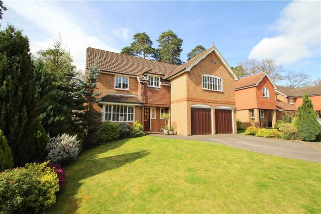 Thumbnail Detached house for sale in The Mallards, Frimley, Camberley, Surrey