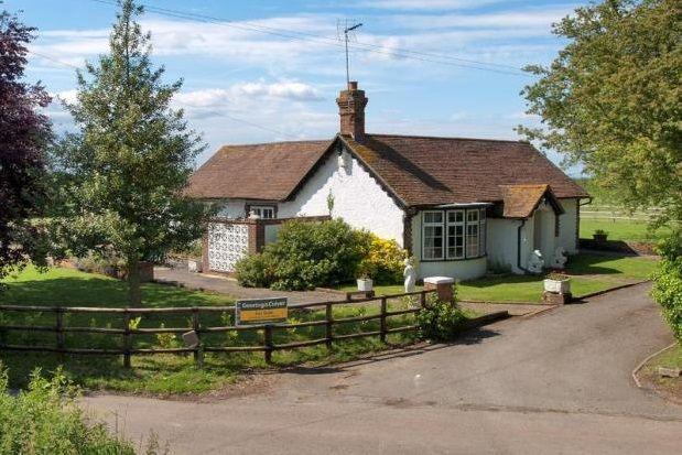 Thumbnail Bungalow to rent in Throwley Forstal, Faversham