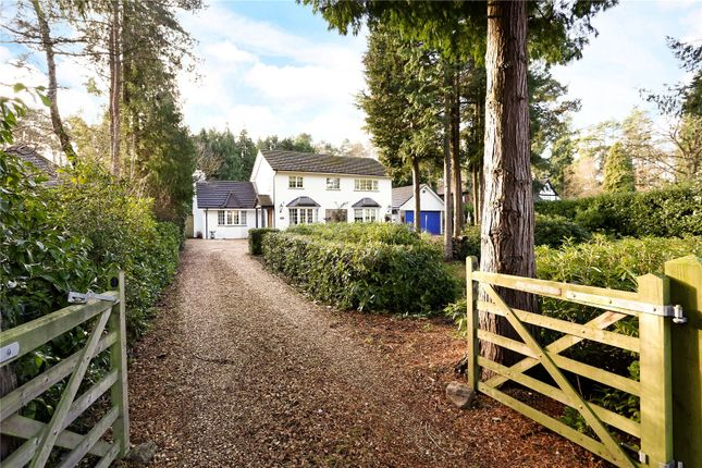 Thumbnail Detached house for sale in Glebe Lane, Rushmoor, Farnham, Surrey