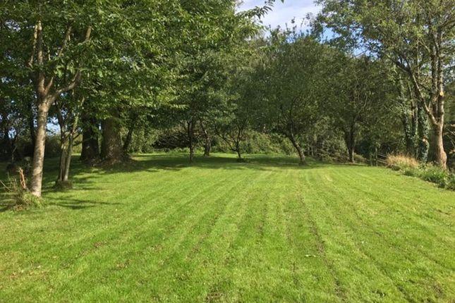 Lawns In Summer of Pentre-Cwrt, Llandysul SA44