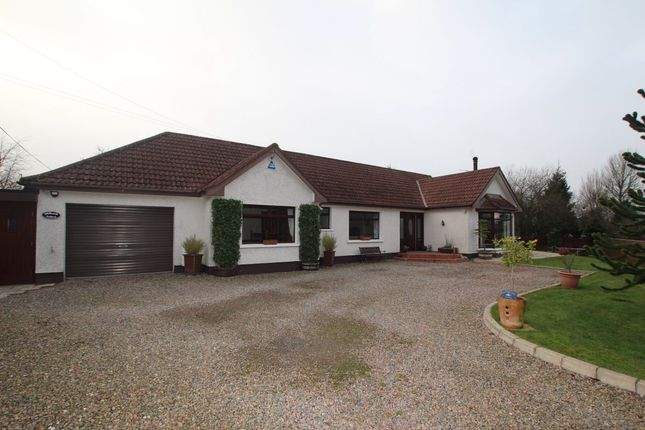 Thumbnail Bungalow for sale in Millbank Road, Templepatrick, Ballyclare