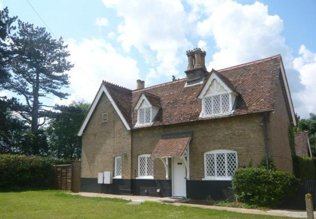 Thumbnail Detached house to rent in Kingshill, Old Warden, Biggleswade