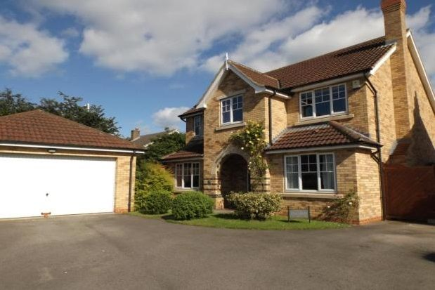Thumbnail Detached house to rent in Newlyn Drive, Darlington