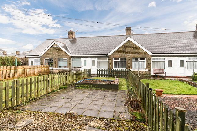 Thumbnail Cottage to rent in 3 Blenkinsopp View, Haltwhistle, Northumberland