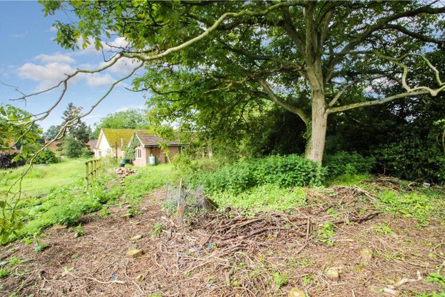 Garden of The Street, Shotesham All Saints, Norwich, Norfolk NR15