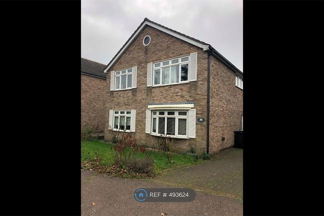 Thumbnail Detached house to rent in Berrimans Close, Colchester