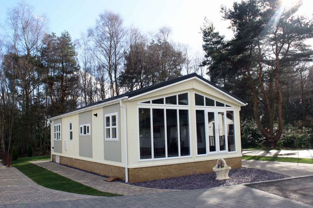 Thumbnail Bungalow for sale in Matchams Lane, Hurn, Christchurch, Dorset BH236Aw