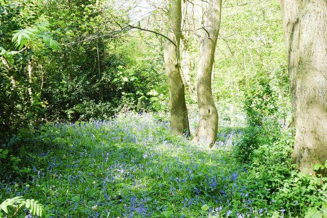Photo 2 of Chantry Road, Stourton, Stourbridge DY7