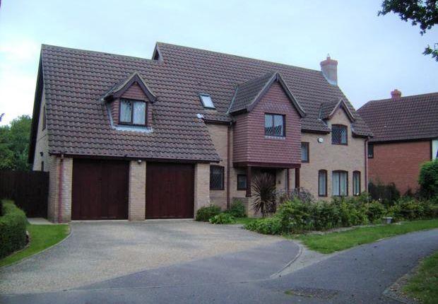 Thumbnail Detached house to rent in Lavenham Drive, Biddenham